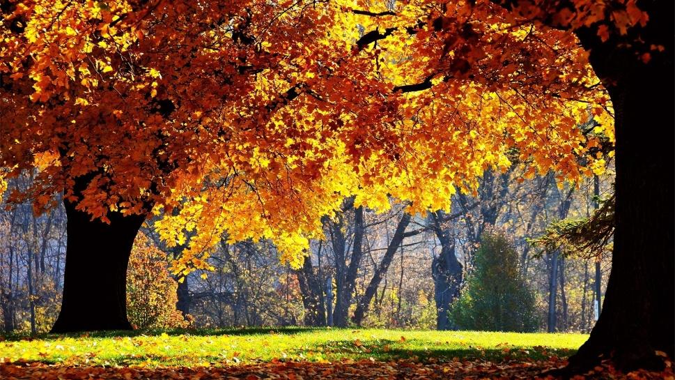 Trees-in-autumn-autumn-22174416-1920-1080