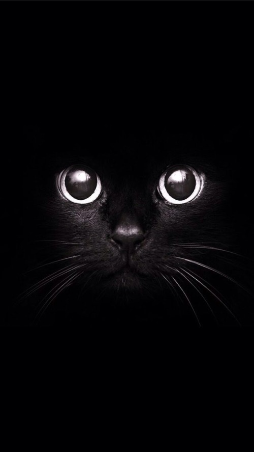 black-and-white-cat-photography-wallpapercat-art-black-and-white-beautiful-photo-halloween-cats-black-lion-fjanckme