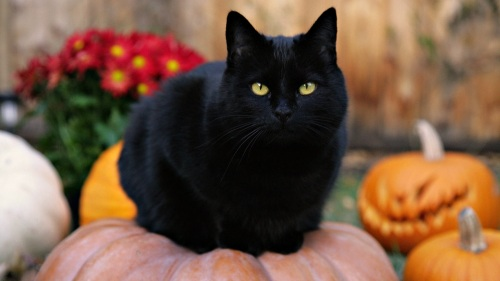 black-cat-on-pumpkin