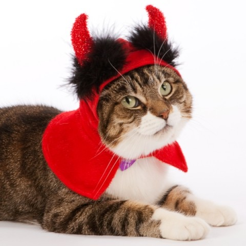 cats-halloween-party-16