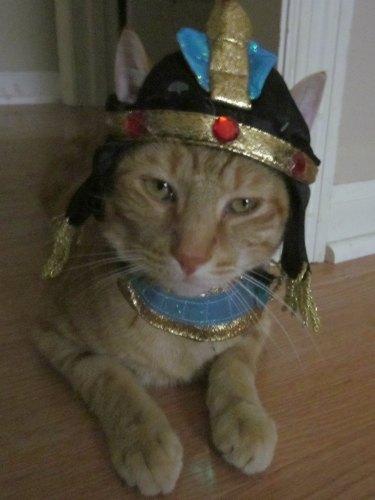 cleopatra-cat-costume