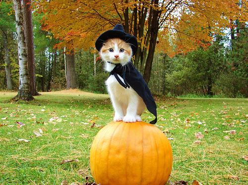 cute-halloween-cats