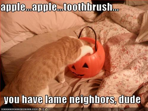funny-pictures-cat-insults-your-neighbors