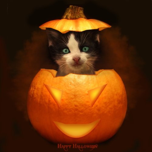 halloween-cat-in-pumpkin