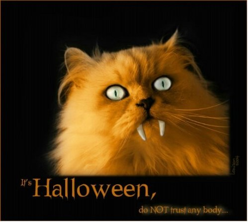 halloween-cat-with-fangs