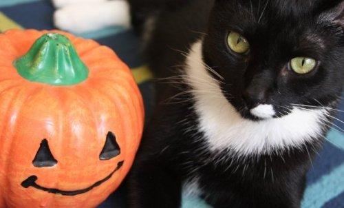 Halloween-Prince