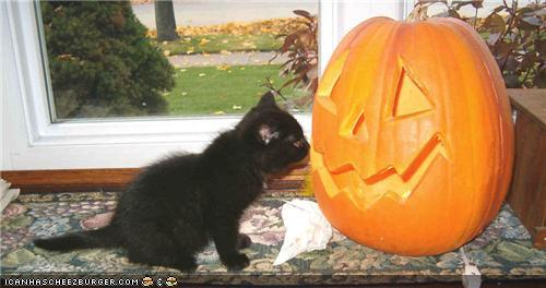 halloween_caturday