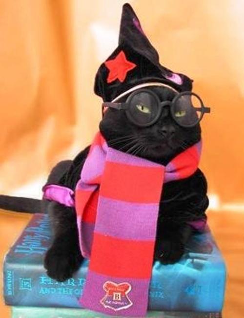 Harry-Potter-Cat-Halloween-Costume.jpg