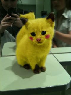 pokemon-cat