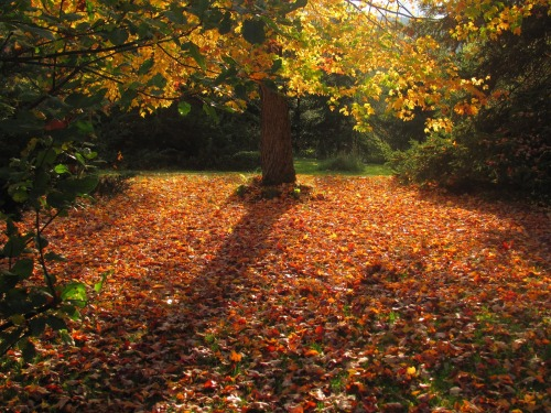 AutumnMore12 061