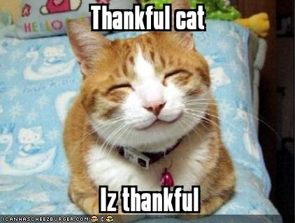 thankful-cat
