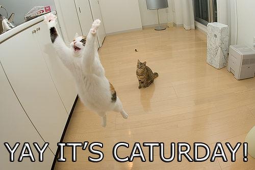 CaturdayYay