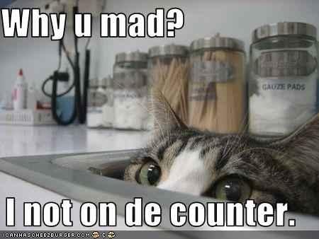 cat-n-counter