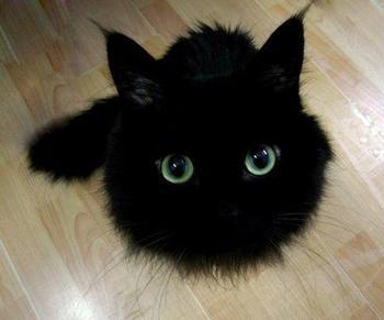 black-cat-82213467760_xlarge