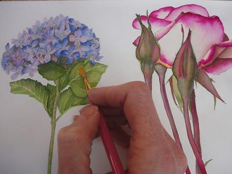 caroline-crawford-artist-botanical-painting-art-day