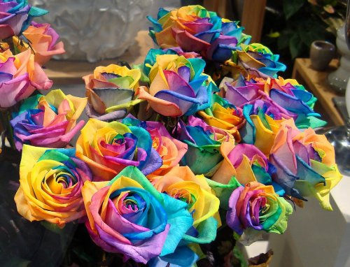 a-bunch-of-rainbow-roses-for-sale-by-Gertrud-K
