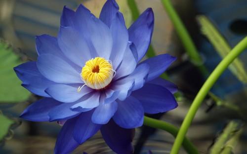Big Blue Flower