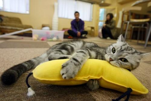 cat-house-9