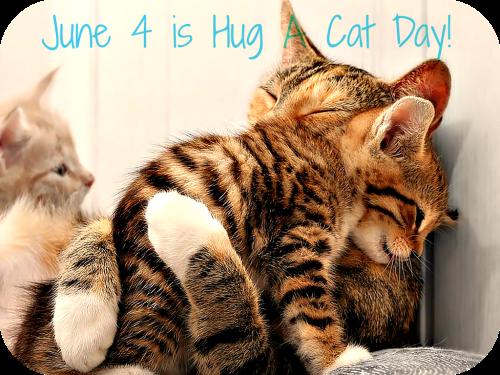 cat-hugs