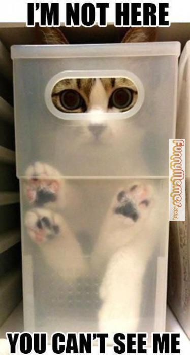 Cat-memes-im-not-here-374x700