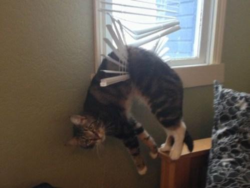catsaturday-caturday-kitten-caught-red-handed