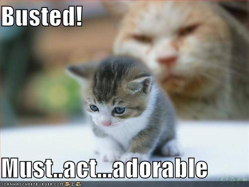 funny-pictures-adorable-kitten