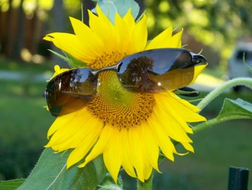 it's so bright I haveta wear shades