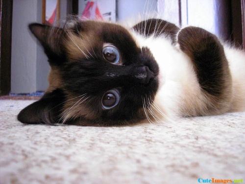 world-cat-day-kittens-cuteimages.net