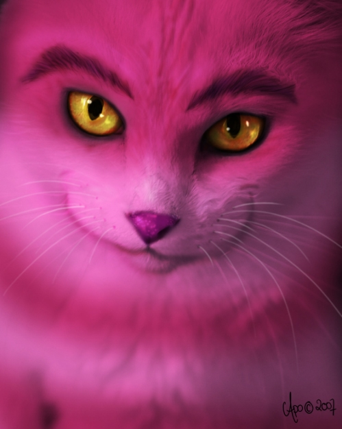 The-real-Cheshire-Cat-the-cheshire-cat-23507016-559-700