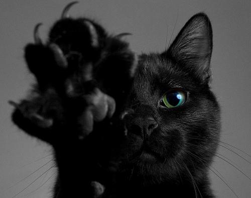 black-cat-4