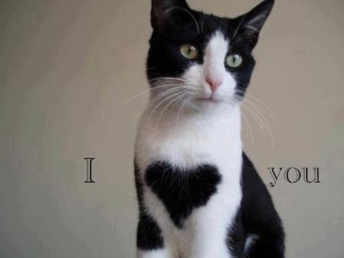 caturday-saturday-we-welcome-you-and-the-cats-3d1ae4fe-062f-4adb-987f-d32f7f514abd_original