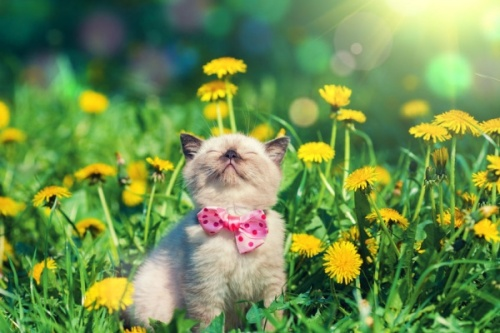 Ways-to-Keep-Your-Pet-Healthy-This-Spring
