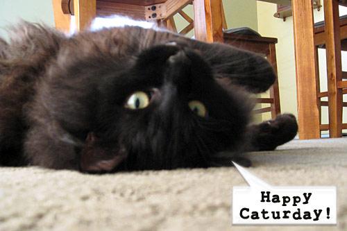 HappyCaturday_0876